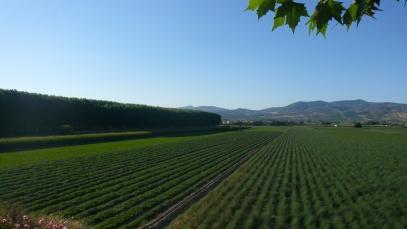 Vista Panorámica a la Vega de Granada