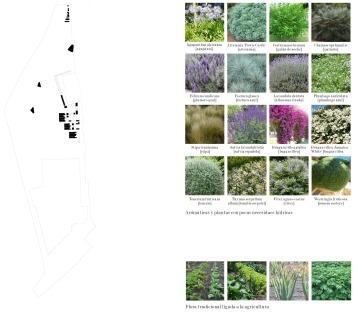 Vegetacion 2: Flora Tradicional