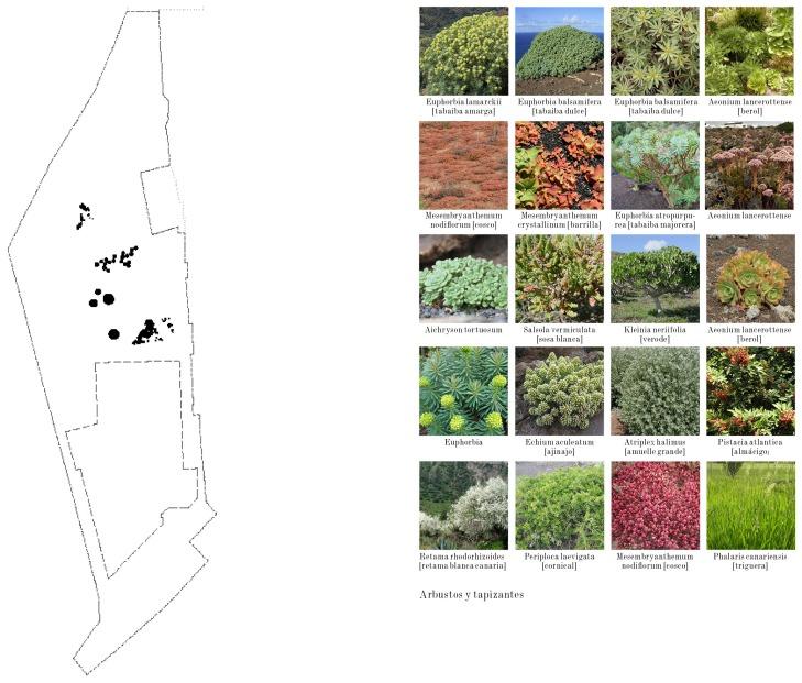 Vegetacion 3: Flora Endémica
