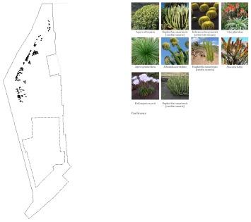 Vegetacion 4: Cactáceas